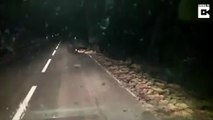 Fork in the road is actually pork in the road, as adorable line of young boars halt driver