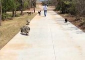 Animals Join Lucky Human for a Lovely Walk