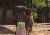 Mai Thai the Elephant Celebrates 45th Birthday at Cincinnati Zoo
