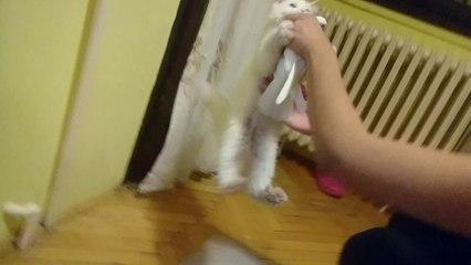 funny persian cat attacks pigeon - choku attacks pigeon