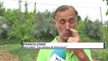 Alpes-de-Haute-Provence : le gel a frappé les vergers d'abricotier