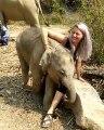 Câlin d'un éléphanteau.. c'est limite encombrant !