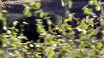 Lion vs Zebra - When Prey Fights Back - Most Amazing Wild Animal Attacks HD