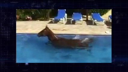 Horse in swimming pool