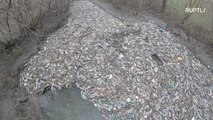 LITTERally clogged! Island of garbage blocks Russian river