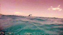 An experienced diver films a dolphin in the Bahamas as it plays in the water by jumping and diving. The dolphin's tail splashes excitedly, it looks like it is h