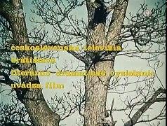 Horali 1974 cely film ♥ CELY DIL part 2 2