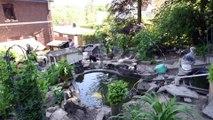 Une vraie arche de noé à Tilff