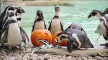"""""""Halloween"""" në kopshtin zoologjik  - Top Channel Albania - News - Lajme"""