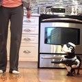 What's Your Favorite Crusoe the Wiener Dog Star Wars Vid?