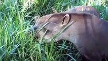 Animais, Fauna pantaneira, Fauna brasileira, pantanal, vida selvagem,