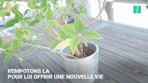 Votre plante va mal ? Voici comment la rempoter
