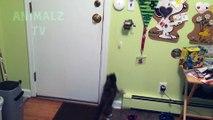 Chats drôles jouant avec des cordes