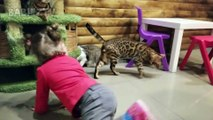 Chats drôles jouant avec Toddler dans Zoo