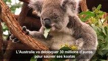 L'Australie promet des millions pour aider ses koalas