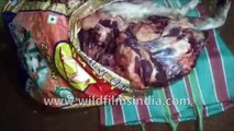 Indians caught with dog meat for sale