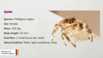Spiders Are Being Trained To Jump On Demand So We Can Build Better Robots