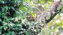 Beautiful wild birds: The parent birds feeding their young birds #12