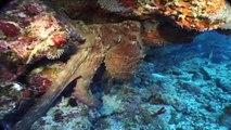 Maldives: diving paradise (part 5)