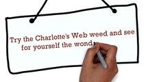Charlotte's Web weed