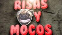 Videos Divertidos de Perros Y Gatos Vs Bichos E Insectos Parte 2 - Videos De Risa