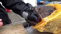 Un pecheur se retrouve la main coincée dans la gueule d'un poisson terrifiant