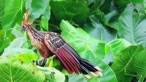 Chim mẹ hôi thối Chim non bản lĩnh thả rơi mình xuống nước không để kẻ khác ăn thịt