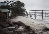 Cold Snap Weather Washes Fish Farm Ashore at Hinsby Beach