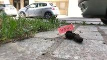Paris : dans le 16e arrondissement, ils signalent les crottes de chien pour souligner les incivilités