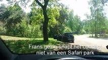 Des touristes français sortent de leur voiture pendant un safari parc (Pays-Bas)