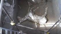 Pompéi : la dépouille d'un énorme cheval découverte dans une villa - 11/05/2018