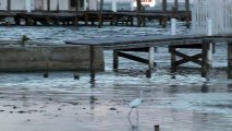 Grand Baymen Belize retirement like a crane walking on the