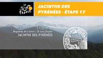 Étape 17 : Jacinthe des Pyrénées - Conservatoire botanique national des Pyrénées et Midi-Pyrénées