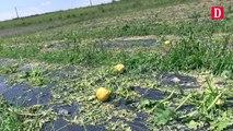 Ariège: des cultures maraîchères dévastées par l'orage