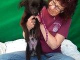 A5185748 Nolan | Spaniel Puppy