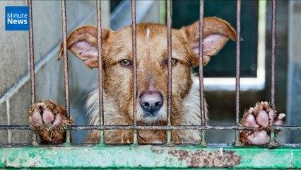 Californie : La vente d'animaux d'élevage dans les animaleries est désormais interdite