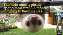 Do you ever have days where you feel like a baby sloth?(Via Did You Know)