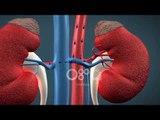 Ora News - 14% e popullatës e prekur nga sëmundjet e veshkave