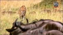 Most CRAZIEST Animal attacks #3- Amazing Wild Animal Attacks Giraffe,Lion,Cheetah,Hyena