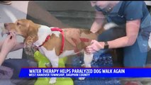 Paralyzed Dog Learning to Walk Again Thanks to Water Therapy