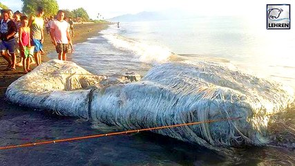 Mysterious Hairy Sea Creature Washes Up On Beach & Terrifies Locals