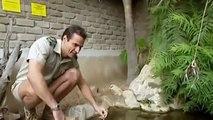 Snake Documentary Wildlife Documentary 2015 Tortoise & Turtle National Geographic Documentaries