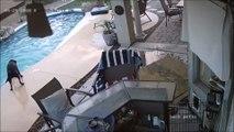 Ce chien courageux sauve son ami dans une piscine