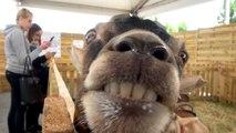 Foir'expo: un saut à l'Arche des animaux