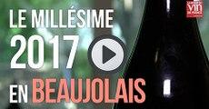 Beaujolais : Le millésime 2017 livre des vins aux fruits scintillants