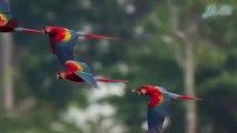 Top 20 Loài Chim Đẹp Nhất Thế Giới - Jimi Channel