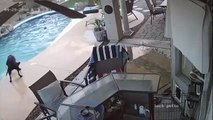 Ce chien sauve son copain de la noyade dans une piscine