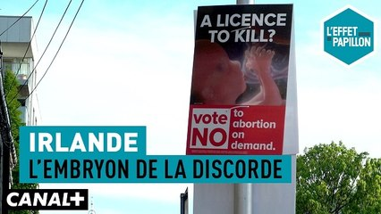 Irlande : L'embryon de la discorde - L'Effet Papillon du 19/05  -  CANAL+
