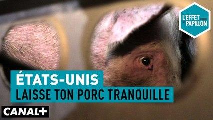 États-Unis : Laisse ton porc tranquille - L'Effet Papillon du 19/05 - CANAL+