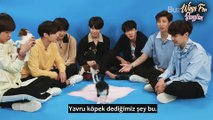 [TÜRKÇE] BTS Plays With Puppies While Answering Fan Questions